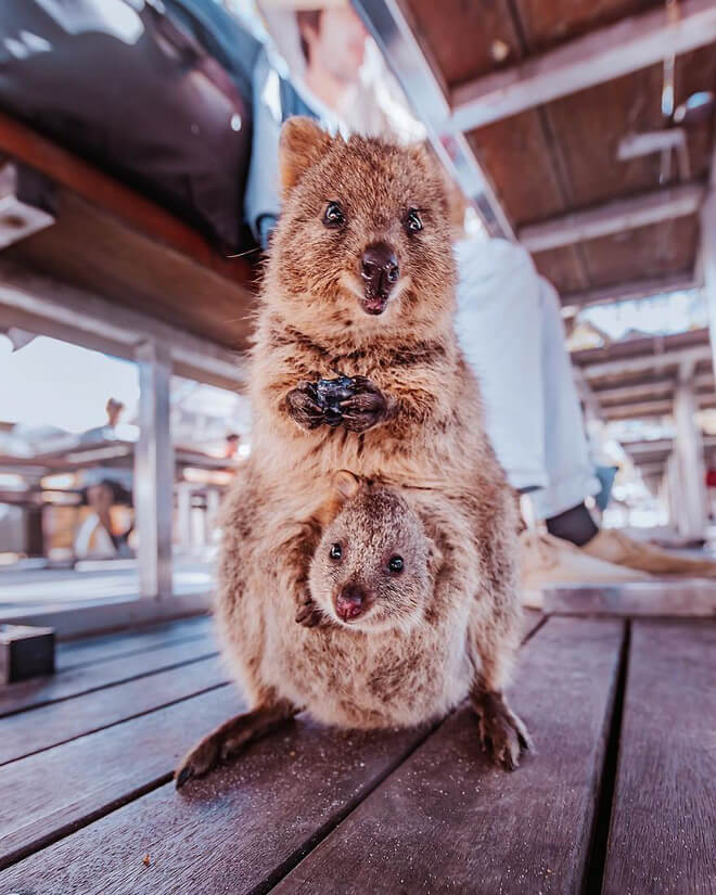 du lịch ở Perth Úc