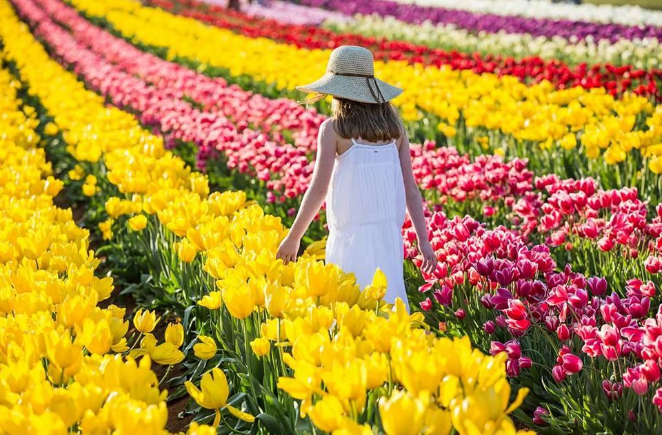 Lễ hội hoa xuân nước Úc