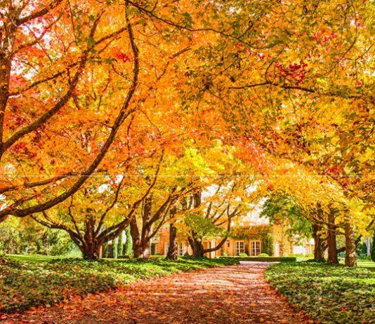 du lịch Úc mùa thu