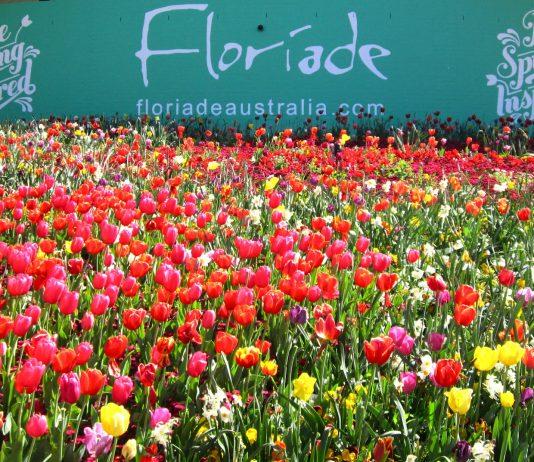 du lịch Úc lễ hội hoa Floriade